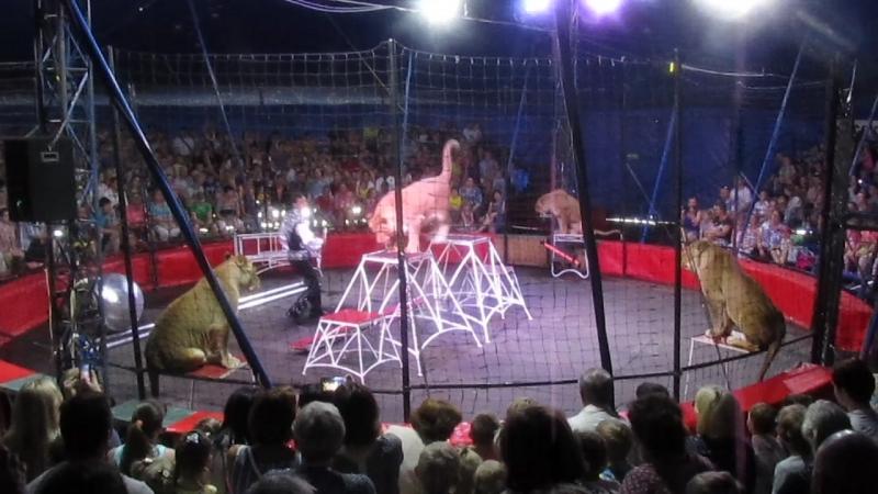 цирк 2018 хищники