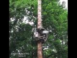 Робот-сучкорез, который сам взбирается по дереву.