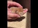 котик, какая милота будущий боец