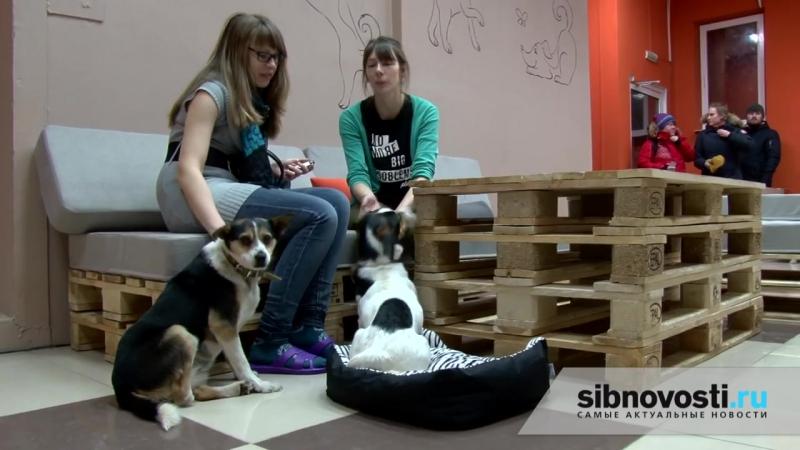 Первое в России пёсокафе Dog House открылось в Новосибирске