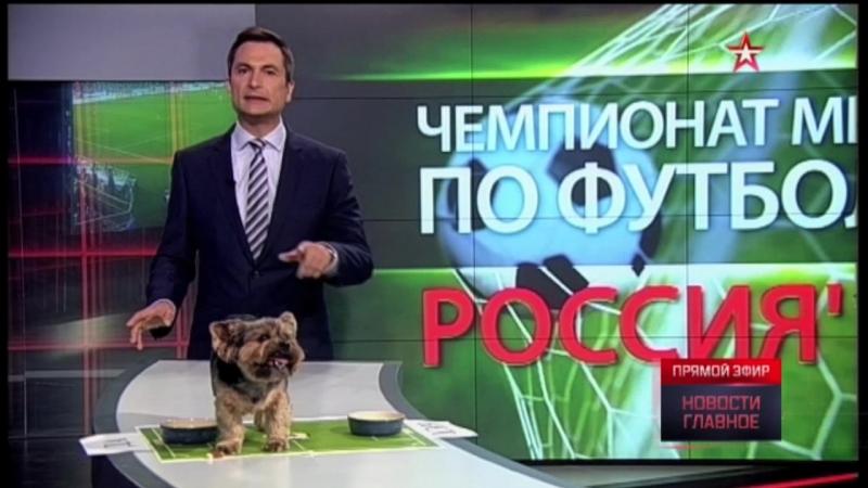 Пес ведущего «Звезды» предсказал итоги матча Россия-Уругвай