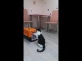 Савелька знакомится с новеньким котиком