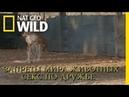 Nat Geo Wild: Запреты мира животных. Секс по дружбе 2018 (1080p)