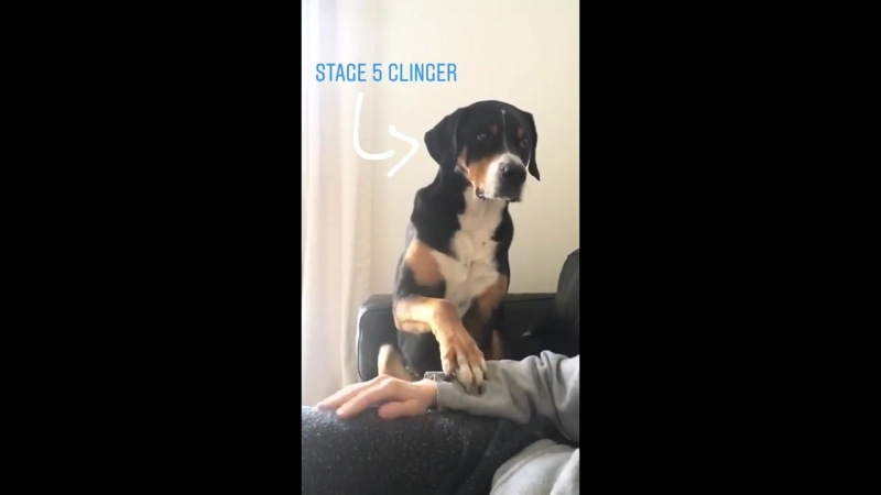 Dog keeps pestering lad to stroke it
