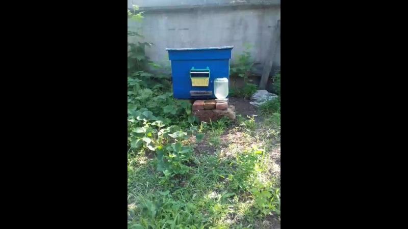 пчолки таскають мед з пелком😊