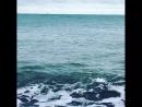 Дельфины в Сочи плещутся у самого берега 15.01.2018