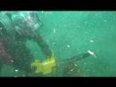 Подводная арбористика