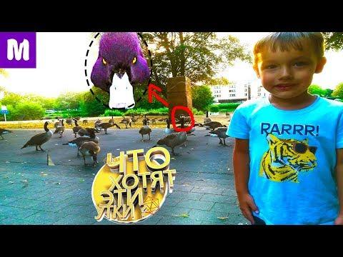 Утиный Фейсконтроль vlog Нападение уток по дороге к детской площадке Мистер Сеня