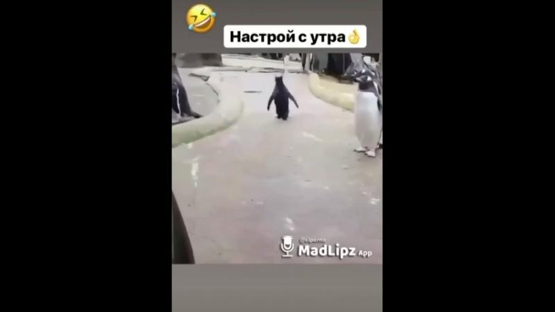 Что за пингвин