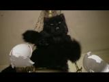Попытка задержания Кота Бегемота