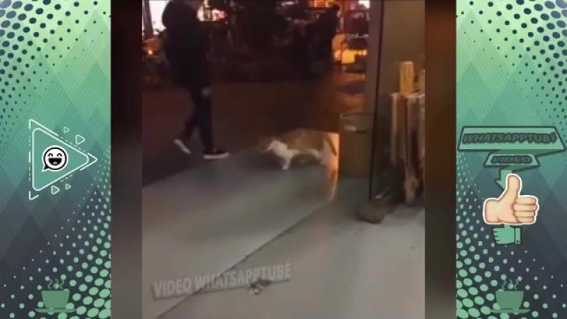 اضحك حتى الموت على القطط ( قطط vs الفئران - قطط vs قطط ) - 2018.mp4