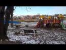 Бродячие собаки в парке