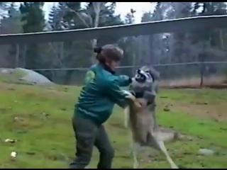 Дрессировщица волков