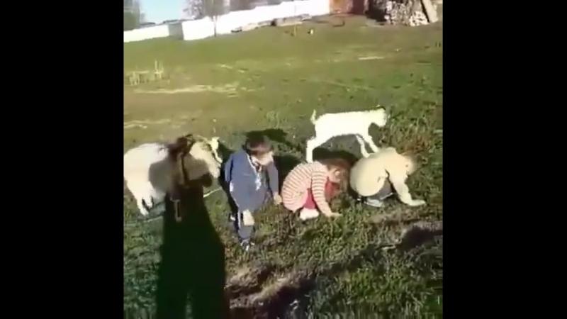 Маленькие артисты - циркачи в Арском районе, республика Татарстан.