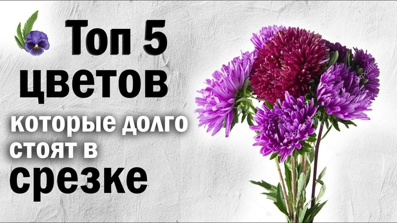 ТОП 5 Цветов Которые Долго Стоят в Срезке Цветы Которые Будут Долго Стоять в Вазе Флористика