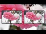 Евгений Дога -Цветы на снегу - Монтаж Светлана Левина