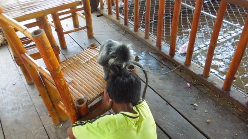 Проверка на вшивость по Камбоджийски :)