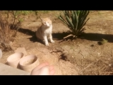 Наши дворовые красавцы - кот и кошка