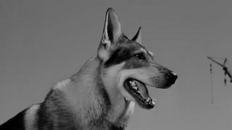 The Littlest Hobo 1958 in english eng 720p