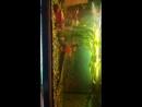 продам рыбок 89530559712