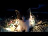 Котик, Стрий