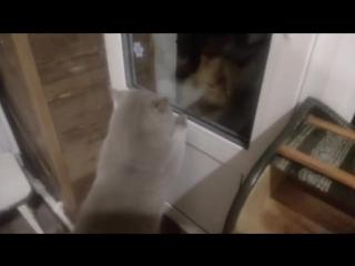 Кот Яша просит открыть дверь.