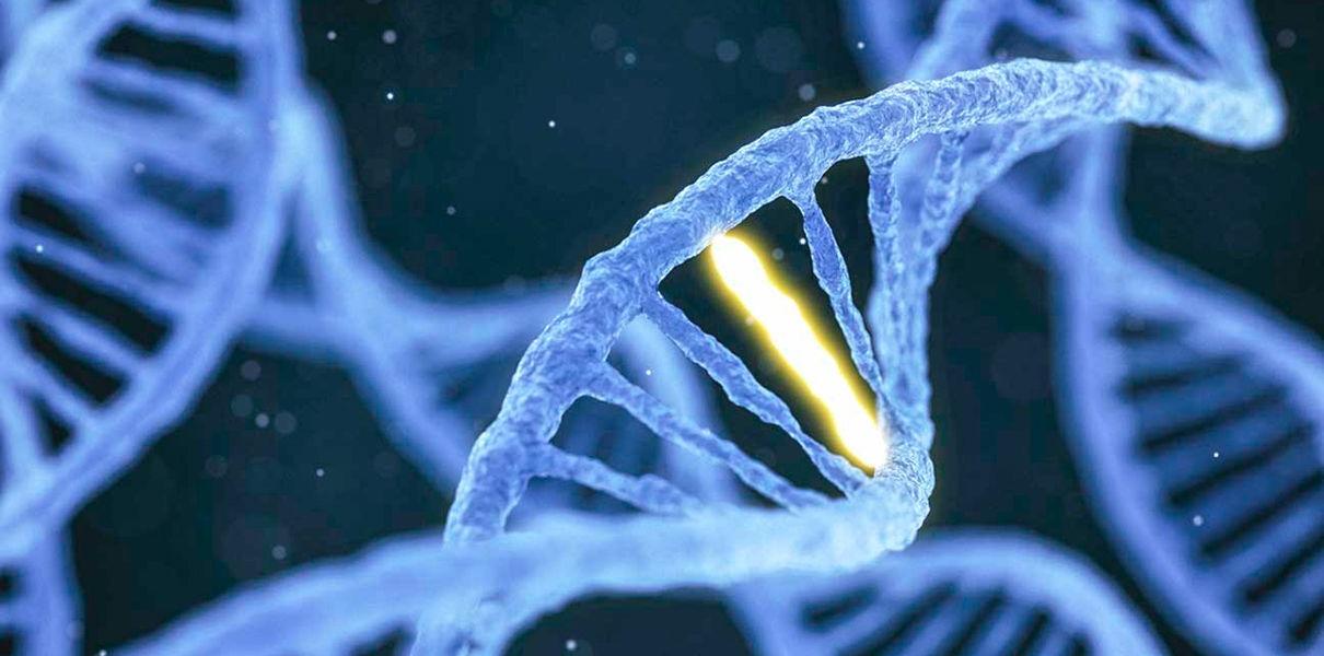 Ученые впервые испытали генное редактирование на млекопитающих