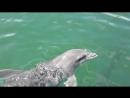 атлантические дельфины по пути на остров Кайо Бланко
