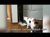Русские коты НЕ боятся огурцов - Russian cats not afraid of Сucumbers