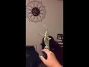 хамелеон ловит пузырики