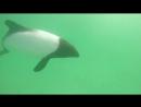 Дельфин - панда