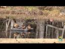 Смешные Птицы и Умные Птицы - Видео подборка приколов _ Funny Bird Videos