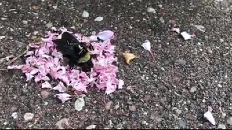 Ants Giving Funeral for Dead Bee Муравьи, дающие похороны для мертвых пчел