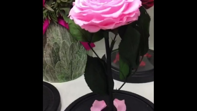 Роза под Куполом Лучший Подарок Оригинал Крым Вечная Роза в Колбе