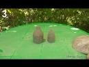 5 идей для сада. Поделки для дачи и сада своими руками.mp4