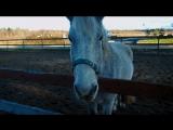 Лошадки. МЧС