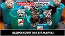 ПРАНКИ ОТ САЙМОНА _ведро котят