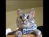 Там мама просила передать, что ей уже действительно нужен зять, а не очередной кот.