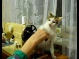 Кошка-швея