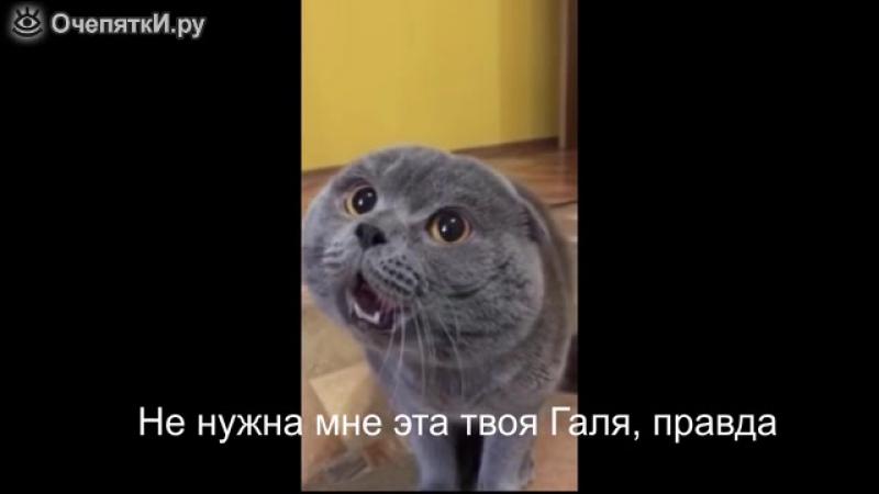 Кот жалуется эволюционирует версий много валерьянка боится чего-то или в бешенстве отравился хозяин живодёр кошак особенный инди