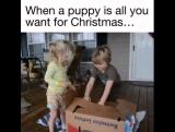 Когда щенок - это то, что ты хотел в подарок!
