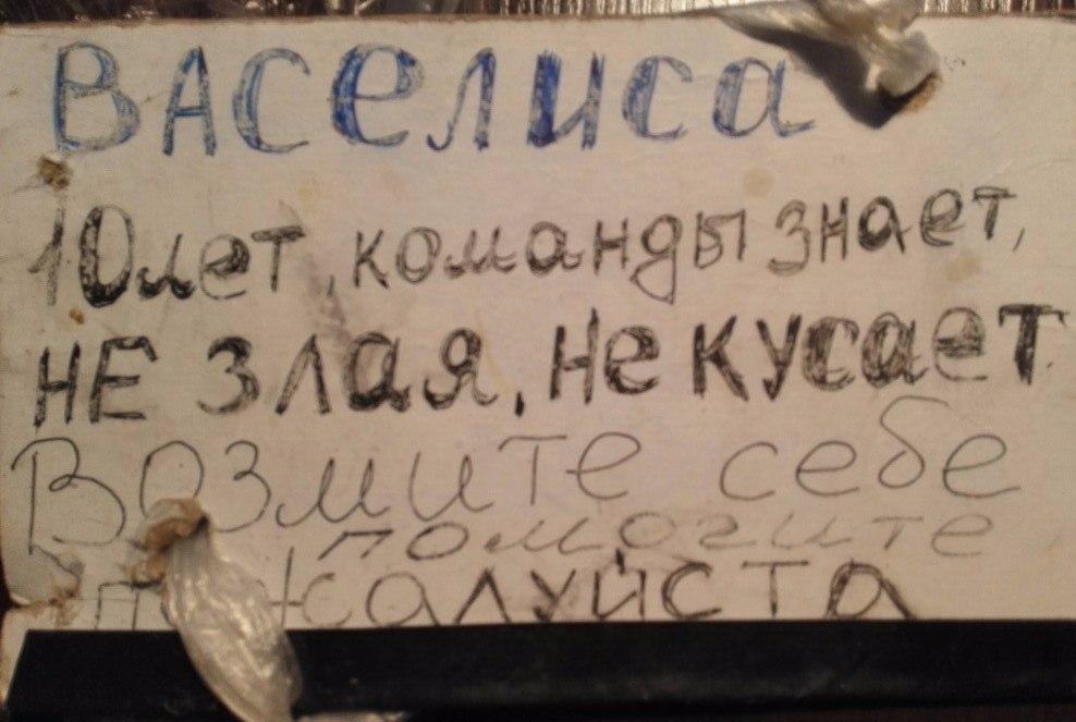 Москва, Васелиса, сука 07.12.2007 г. 10 лет J0Z1AHzGDvI