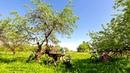Яблоневый Сад Таймлапс 4К Apple Orchard Timelapse 4K video