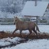 "Частная Конюшня ""Halfter"":Лошади,Минск"
