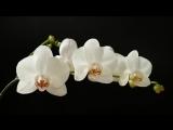! Невероятно красивые цветы фото - Flowers photo