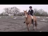 Лошадки это красиво