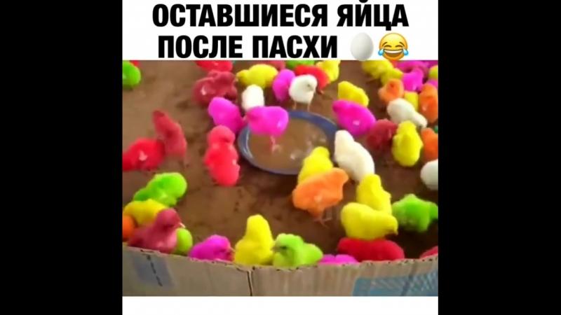 VID-20180410-WA0000 Оставшиеся яйца после пасхи