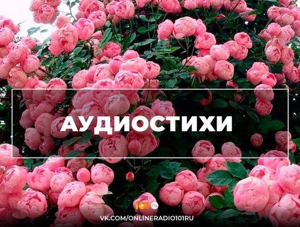 Фото -18284075