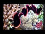 МОИ ЗАБАВНЫЕ ЖИВОТНЫЕ Подводный мир фото Рыбы животные фото