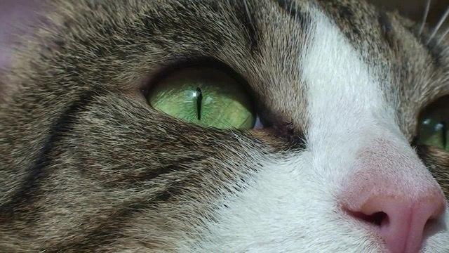 Closeup · coub, коуб
